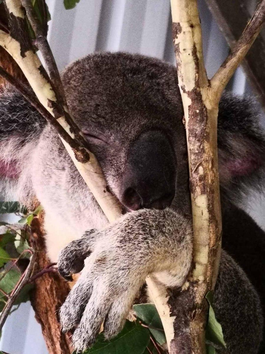 Brisbane_Slideshow_012
