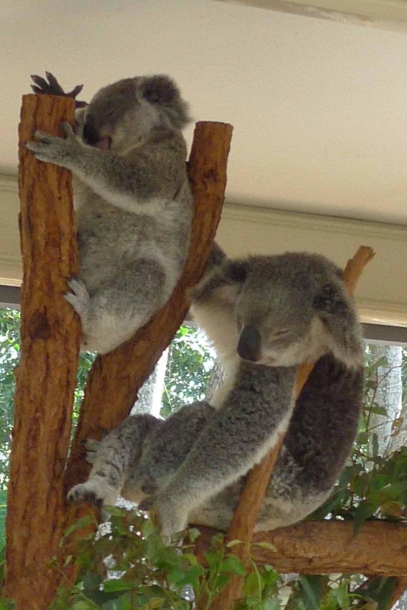 Brisbane_Slideshow_033