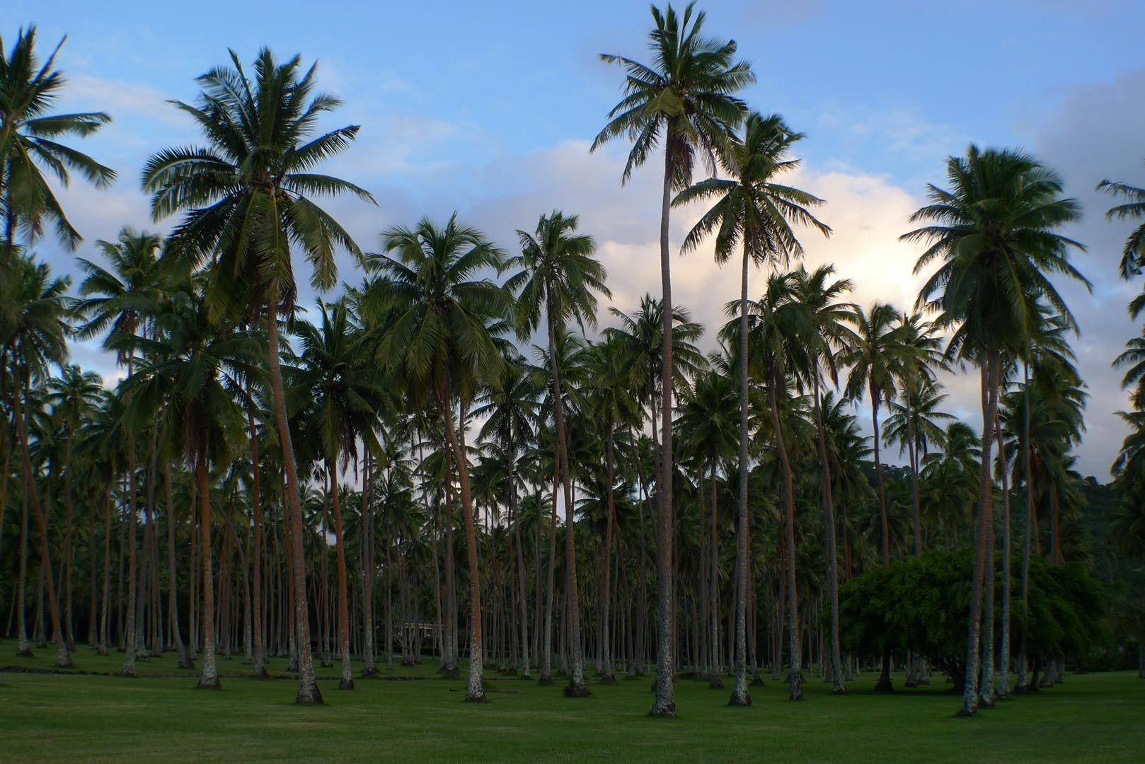 Fiji_Laucala_Plantation-Restaurant_001