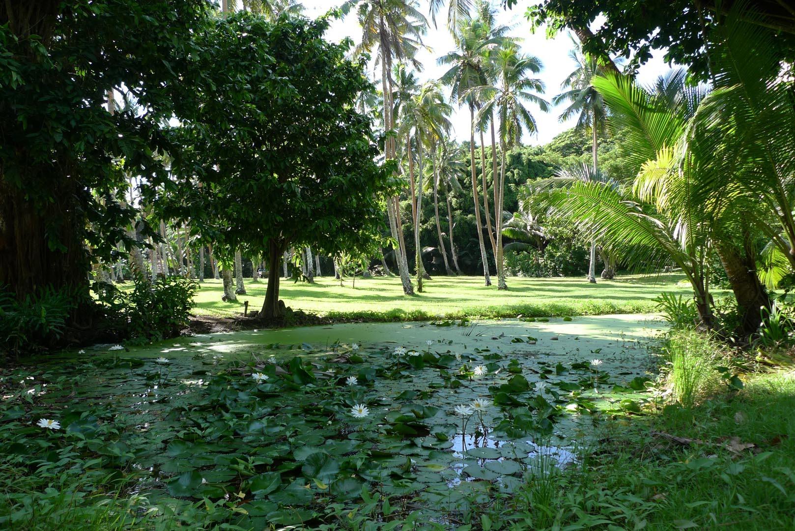 Fiji_Laucala_Private-Island_002