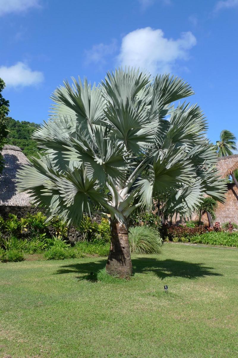 Fiji_Laucala_Private-Island_003