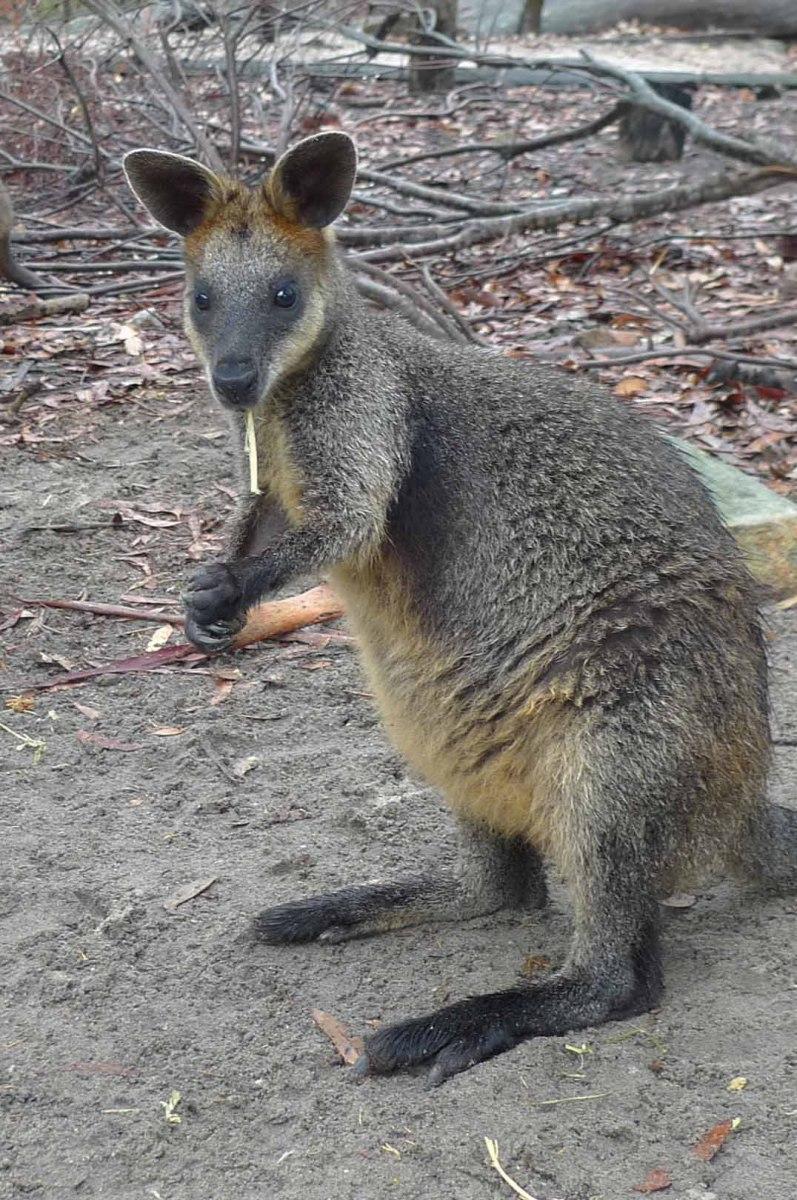 Sydney-Tasmania_Hotspots__044